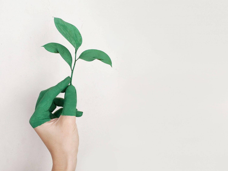 ecologie (1)